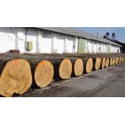 Busteni de paltin, tei, frasin, stejar, cires furnir de la Sc Woodex Utility Srl