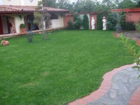 Amenajare si intretinere gradina, gazon, spatii verzi de la Garden Bay Spatii Verzi