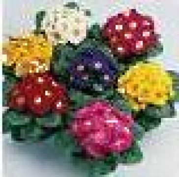 Flori la ghiveci, producator de la Biosolaris Producator Plante
