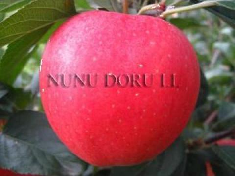 Pomi fructiferi de la Nunu Doru I. I