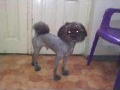 Frizerie canina si felina sector 4 de la Miluchi Vet
