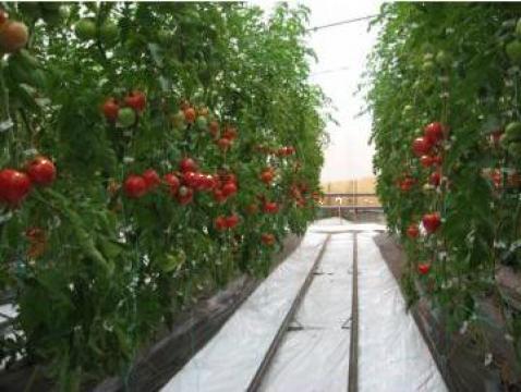 Solarii legumicultura de la Sere Profesional Product