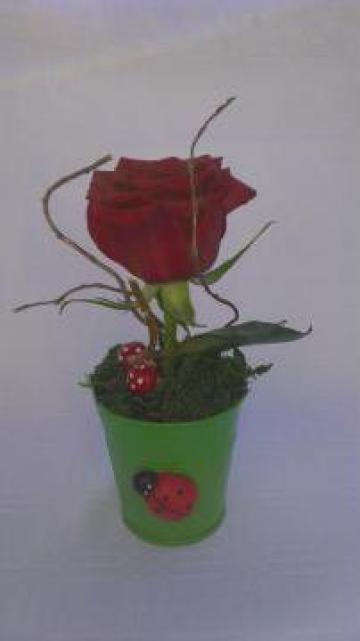 Martisor Galetusa cu trandafir de la Sc Floraria Carmen Srl