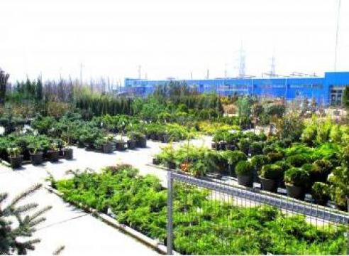 Plante de interior si plante de exterior