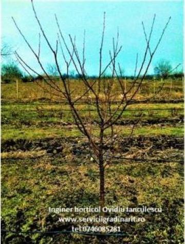Taieri formare intretinere la pomi fructiferi de la Ianculescu Ovidiu Pfa