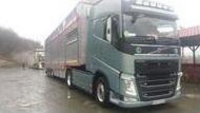 Transport intern si international de animale vii de la Dobrota Trans