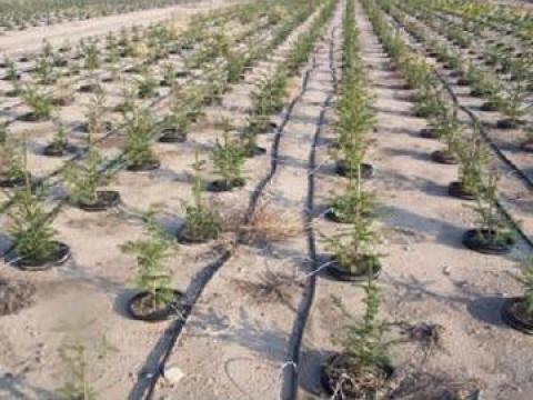 Furtun picurare 50 de la Imd Horticulture Systems Srl
