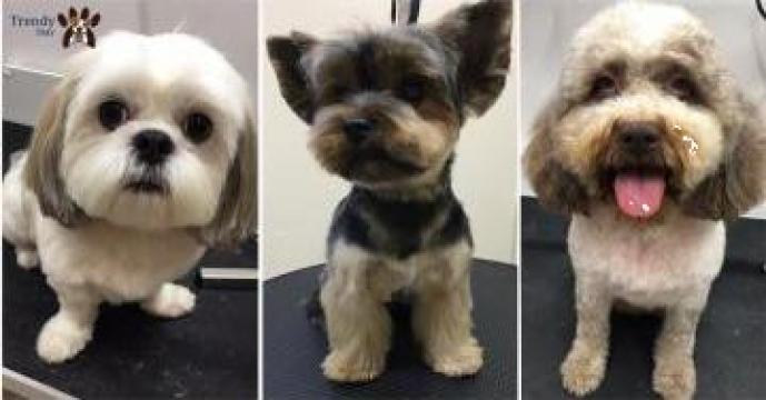 Frizerie canina, tuns caini Otopeni de la Trendy Pets