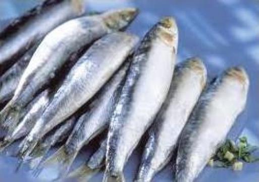 Peste congelat de la Servicii Comerciale, Distributie Si Alimentatie Sl
