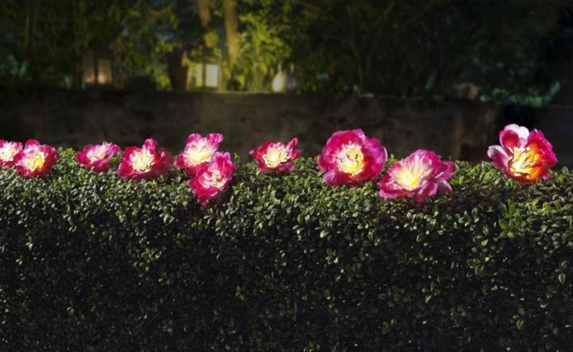 Ghirlanda solara gradina flori Hawaii